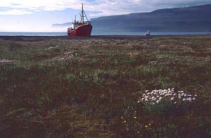 a Island 2001